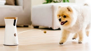Amazing Inventions For Your Pets