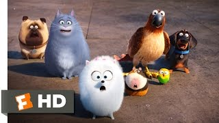 The Secret Life of Pets - Secret Route Scene (4/10) | Movieclips