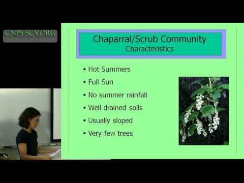 California Native Plants for Bay Area Gardens