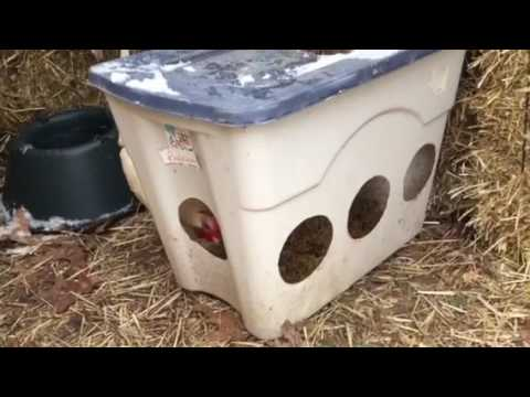 How I'm keeping the chicken water from freezing when the weather is in the 20's