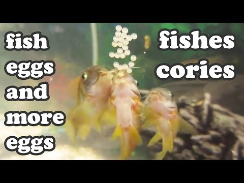 How To Change Cartridge To Your Aquarium Filter Whisper Bio Bag