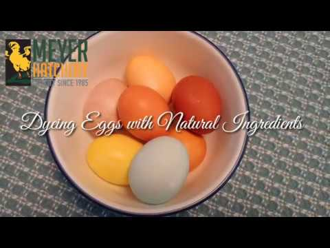 Dyeing Eggs with Natural Ingredients