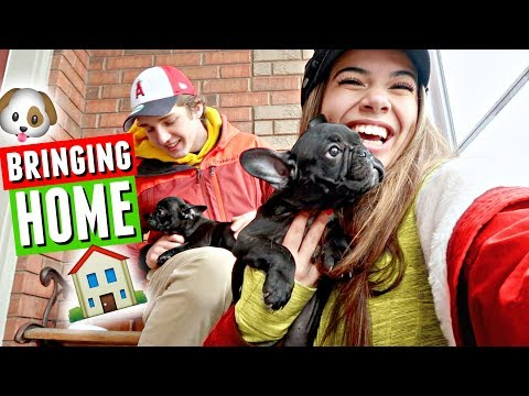 Bringing Home Our French Bulldog Puppy, Duke! | Vlogmas Day 17