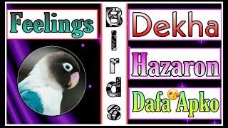 Dekha Hazaro Dafa Aapko Song Beautiful Ringtone Music Romantic 2019 By Zumar Creation