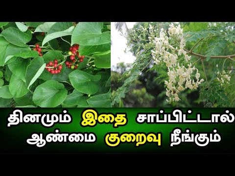 tamil siddha maruthuvam - ஆண்மை குறைவு நீங்க ¦  Health Science  ¦  medicine for sexual problems