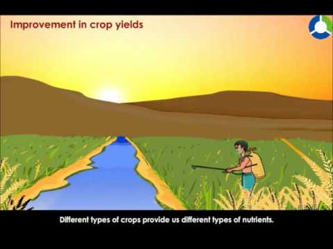 IMPROVEMENT IN CROP YIELDS