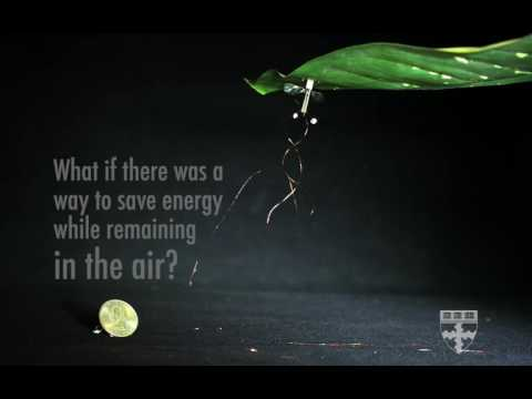 RoboBees use static electricity to stick on walls