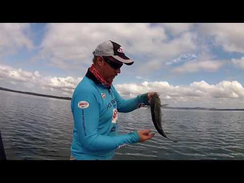 Hot Bite Gang Banger Spoon Fishing for Australian Bass