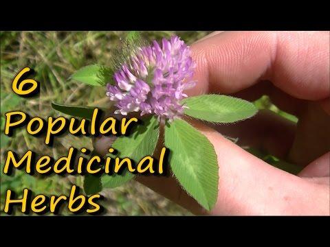6 Popular Medicinal Plants & Herbs