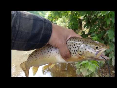 Fishing Trout Streams @ MWR, Clarksville TN (Beaver Video)