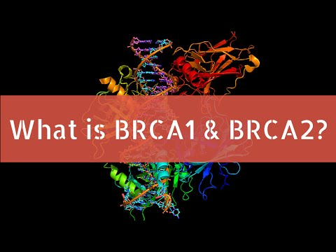 What is BRCA1 and BRCA2?