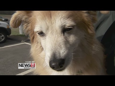 Therapy dog not allowed on flight out of Bradley
