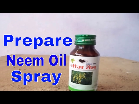 Easy Method For Preparing Neem Oil Spray for pest control (Hindi)