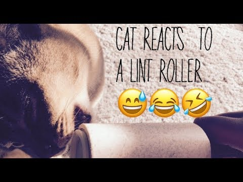 cat reacts to a lint roller!