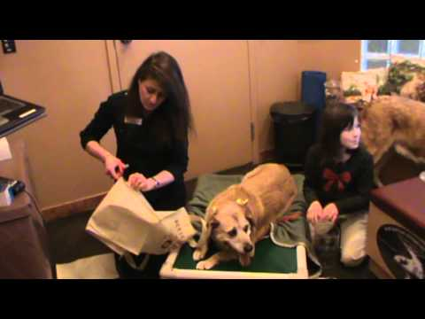 Calgary Vet Shows How to Make a Supportive Sling for Pet's Hind Legs