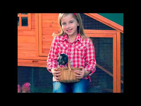 How to build a chicken coop out of pallets DIY medium sized backyard chicken coop simple easy