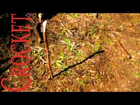 Survival Skills: Obtaining Direction from Sun & Stick