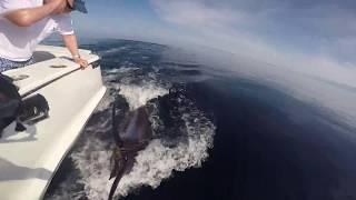 big marlin in cabo