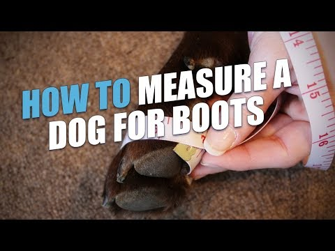 How to Measure a Dog for Boots (Accurate Method)