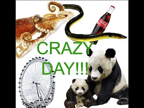 Pandas, World Of CocaCola, Ferris Wheels, Octopus and Eel?