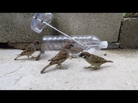 Water bottle bird trap