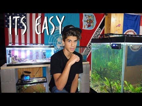 How I Maintain My Fish Tanks!
