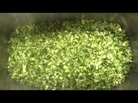 How to cut cilantro in big bunch