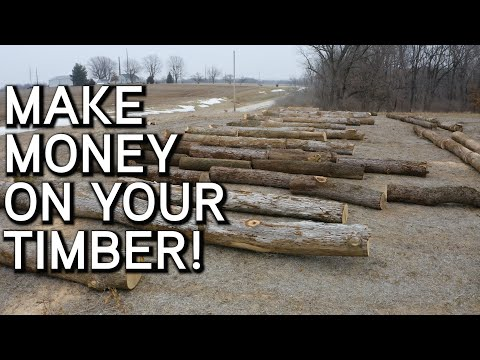 Make Money On Your Timber | Consulting a Forester | What You Need To Know