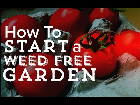 How to START A WEED FREE Garden - with the No Till Method