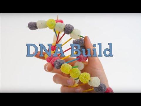 DNA Build