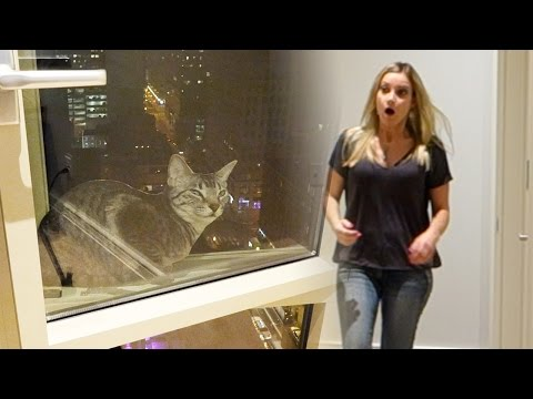 CAT FALLS OUT WINDOW PRANK