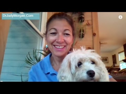 Safest Heartworm and Flea Prevention For Dogs