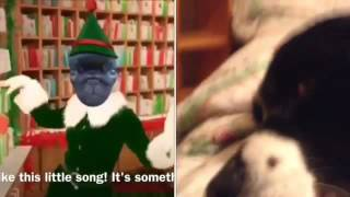 Lily reacts to my pug elf video