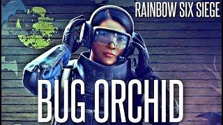 B̶l̶o̶o̶d̶    Bug Orchid Dlc - Rainbow Six Siege New Operators Review