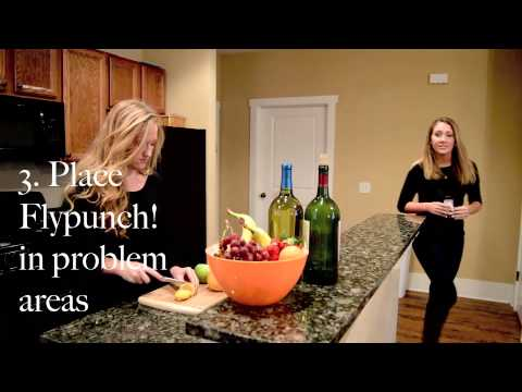 How To Use FlyPunch! to Get Rid of Fruit Flies at Home
