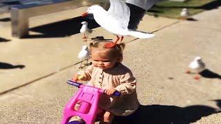 Lindo pájaro que se enamora del bebé 🐣🐥 Recopilación de divertidos bebés y mascotas