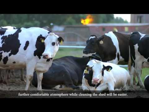 Dairy Farming in Pakistan Urdu