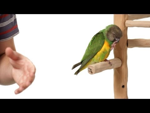 How to Stop Bird from Pooping on You | Parrot Training