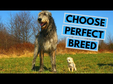 How to Choose the Perfect Dog Breed