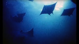Filming Hundreds Of Mobula Rays At Night - Blue Planet II Behind The Scenes