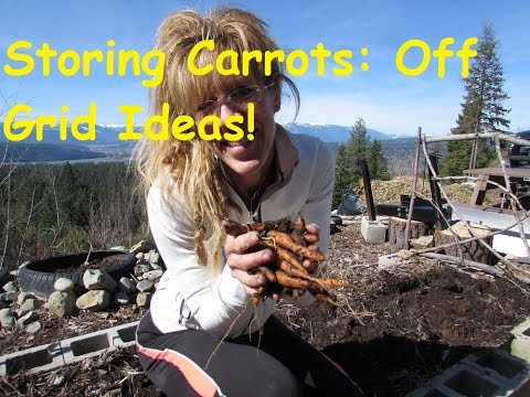 Back To Eden Gardening: Storing Carrots Over Winter