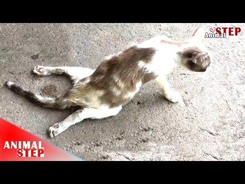Paralyzed Cat Drugging On The Street Just Find Someone For Help