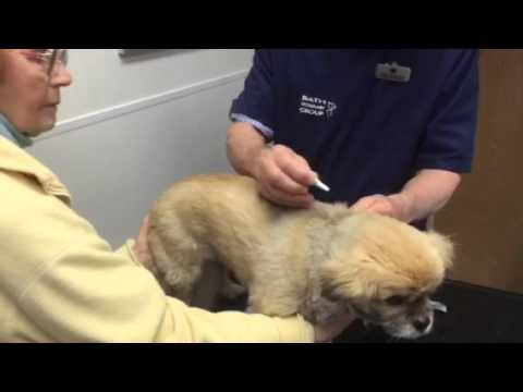 How to apply a spot on flea treatment