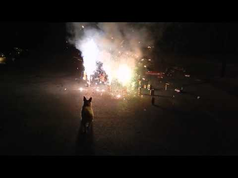 Dog Barking at Fireworks