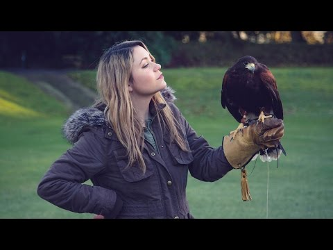 LEARNING FALCONRY  || Gleneagles, Scotland
