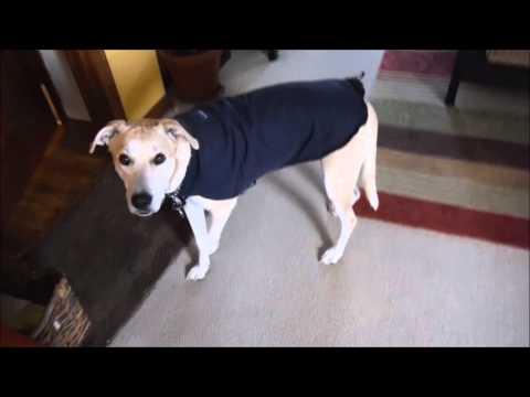 DIY Dog Jacket