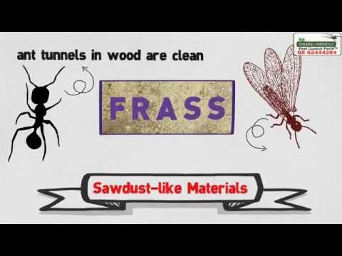 How to get rid of Ants ? ANTS PEST CONTROL PERTH 0424800001