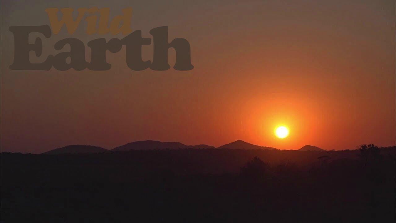 WildEarth - Sunset Safari - 26 July 2020