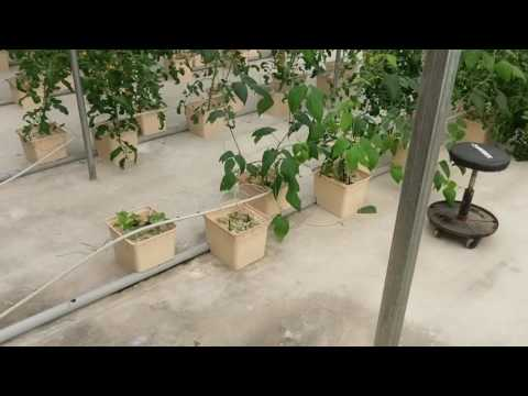 Video tour of the greenhouse.