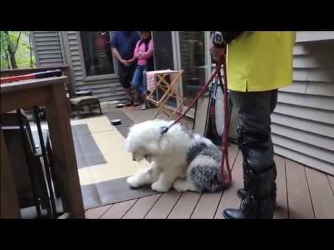 Fix Puppy Food Aggression - DOG INTERVENTION Dog Whisperer/Interventionist BIG CHUCK MCBRIDE